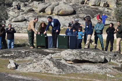 Se elevan a 39 los linces que viven en libertad en Extremadura, tras la suelta de dos nuevos ejemplares en Don Benito