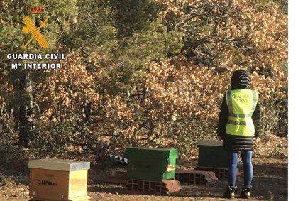 Esclarecido el hurto de 58 colmenas en la comarca palentina de Valdavia