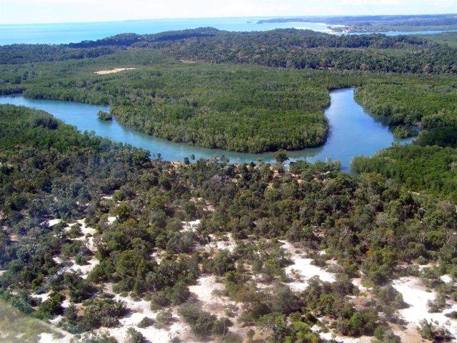 Bosque Costero En Madagascar