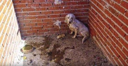 Condenado a un año y medio de cárcel el cazador que maltrató a 55 perros en una finca de Villa del Prado