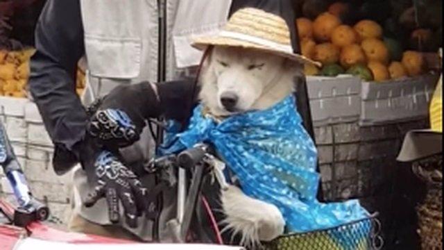 Perro en mercado de Filipinas