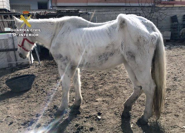 En Caravaca tres personas han sido investigadas por el abandono de una yegua