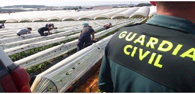 Dispositivo de la Guardia Civil en la campaña agrícola