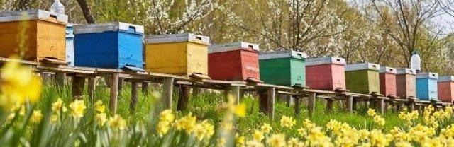 La EFSA confirma que los neonicotinoides perjudican a las abejas y polinizadores