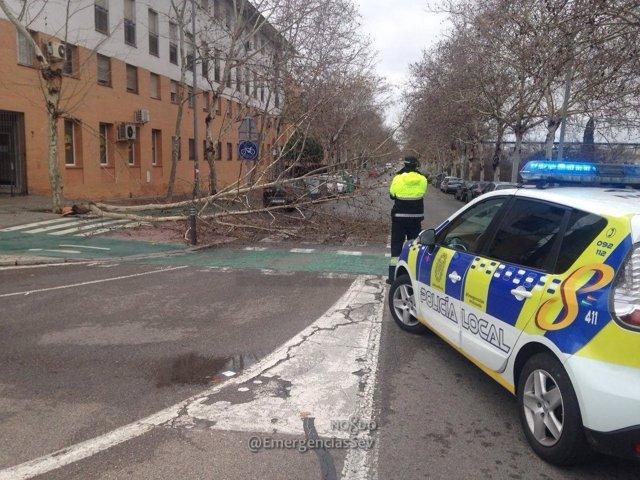 Incidencia por el temporal en Sevilla