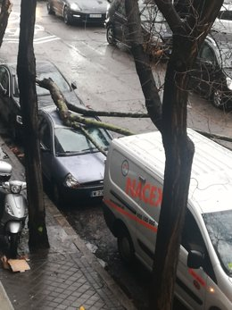 Caída de árbol en Madrid por el fuerte viento