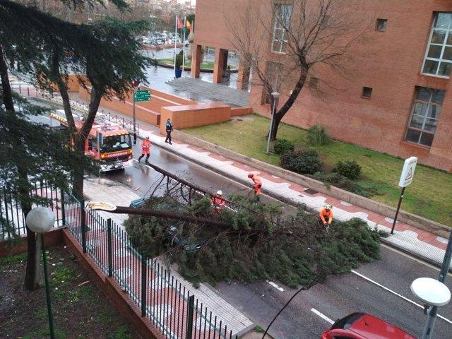 Arbol caído en Alcorcón
