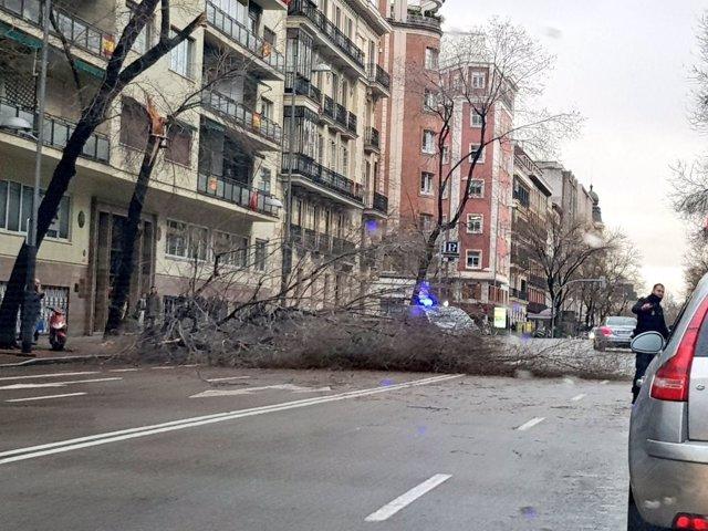 Un árbol caído en Madrid