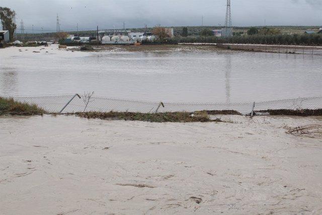 Zona afectada por las lluvias en Arahal (Sevilla)