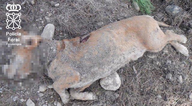 Cuerpo del perro semienterrado