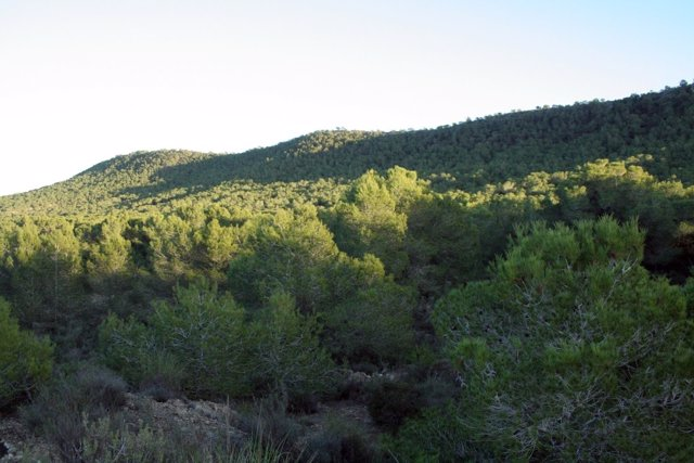 Monte valenciano