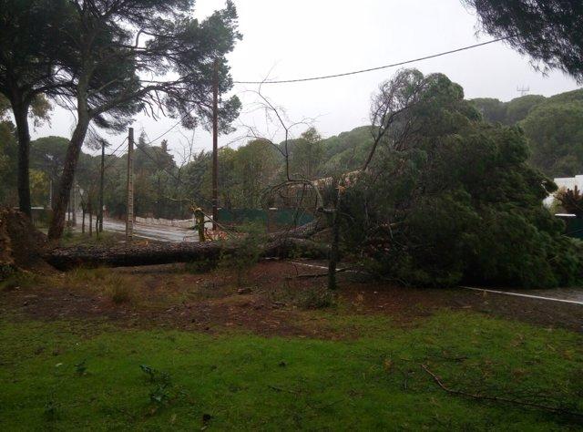 Árbol caído en Cerro Muriano, en Córdoba