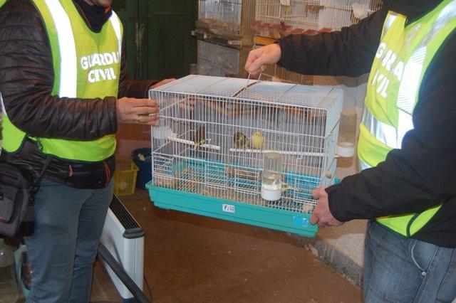 Pájaros recuperados en Pontecesures