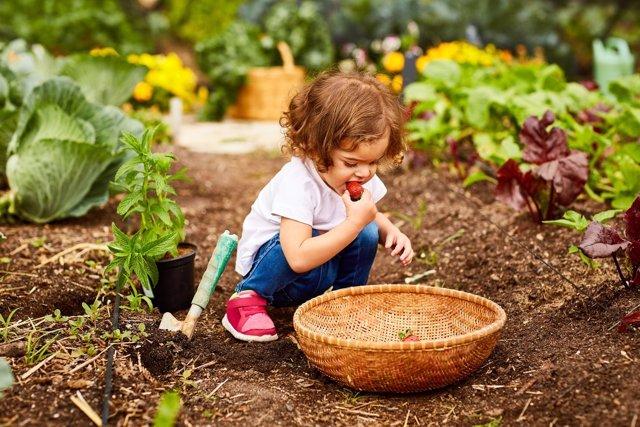 Niña, huerta, jardín cesta, comiendo