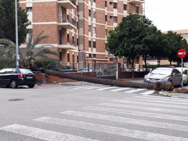 Palmera caída tras el temporal de viento y lluvia en el barrio de Los Remedios