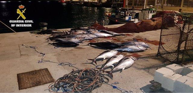 Atunes intervenidos en Tarifa