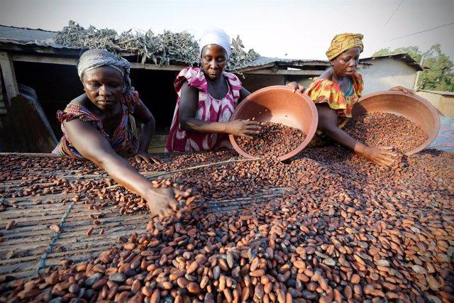 Mujeres con semillas de cacao en un mercado de Niable, Costa de Marfil.