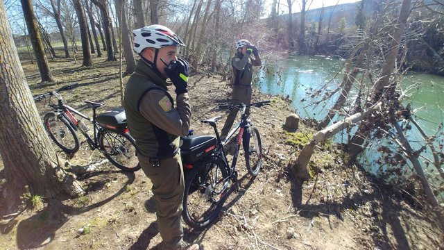 Guardas forestales contemplan daños provocados por castores