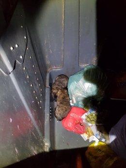 Rescatados dos perros abandonados en un contenedor de Madrid