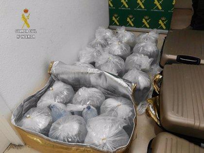 Intervenidas en el aeropuerto de Sevilla 18 kilos de angulas vivas para su exportación a Shangái