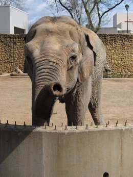 La elefanta del Zoo