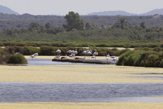 El Parque Natural Maritimoterrestre Es Trenc-Salobrar de Campos