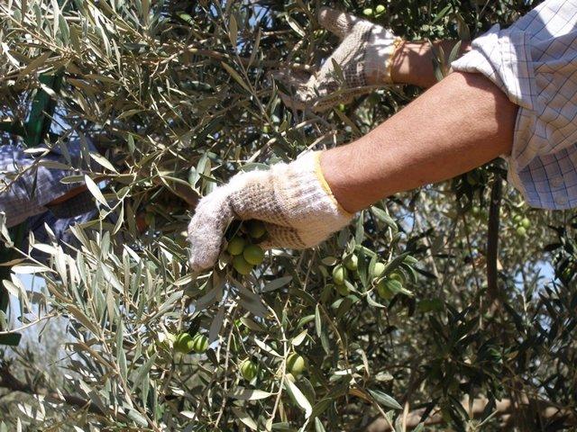 Nota De Prensa De La Consejería De Agricultura, Pesca Y Desarrollo Rural (Verdeo