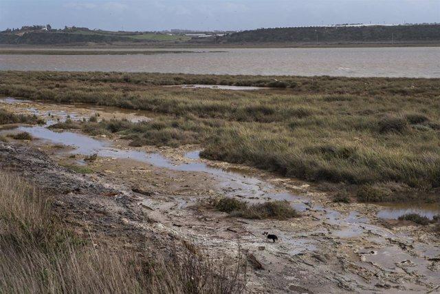 Denuncian vertidos a la Ría de Huelva procedentes de fosfoyesos de Fertiberia
