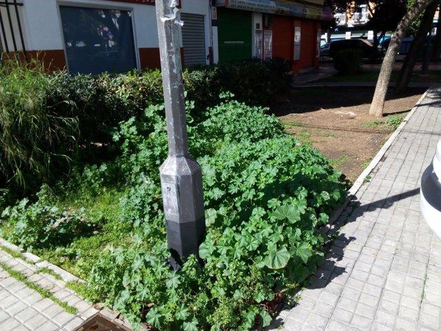 Hierbas que han crecido en Cerro-Amate