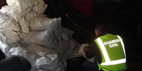 9. Investigan a dos jóvenes por robar más de 6.500 kilos de aguacates en La Palma