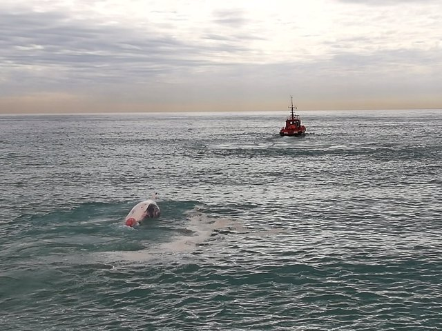 Barco retira la ballena muerta de la playa de Montgat