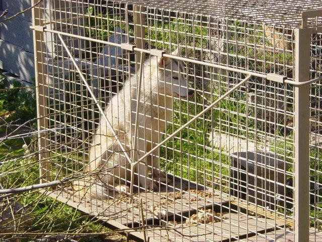 Identificados todos los perros responsables de los 37 ataques a la producción ganadera de Mallorca