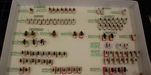 6. La colección de insectos del Cabildo de Tenerife se incorpora a una plataforma on line mundial de biodiversidad