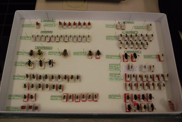Colección de insectos del Museo de la Naturaleza y el Hombre