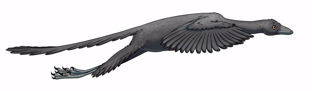 Representación artística del vuelo del Archaeopteryx según el estudio