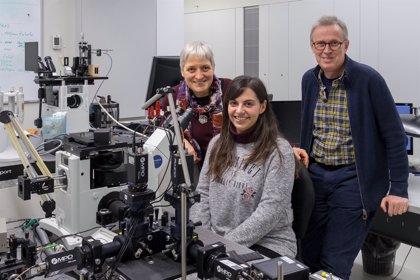 """Científicos de la USC identifican la """"concentración crítica"""" de la proteína que da comienzo al Alzhéimer"""