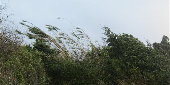 4. Activado el aviso por vientos de más de 100 km/h