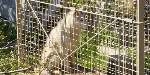 5. Baleares recoge desde 2016 un total de 115 perros responsables de 75 ataques a producciones ganaderas