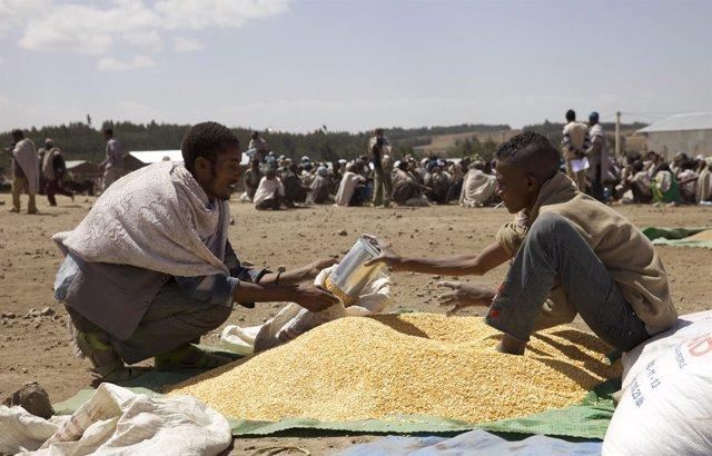 Un agricultor recibe cereal en una distribución de emergencia en Etiopía