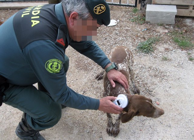 Un agente de la Guardia Civil posa con el perro recuperado
