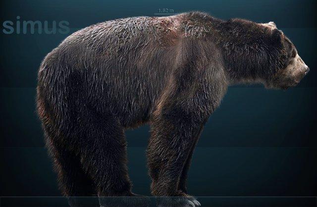 Reconstrucción del oso de cara corta