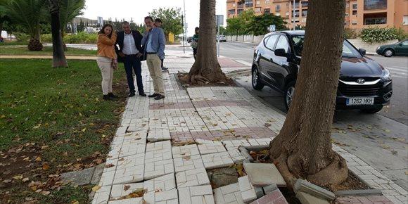 5. Torremolinos elaborará un plan para definir el estado y adecuación de los árboles en el entorno urbano