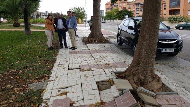 Acera de calle rota por las raíces de árbol  en Torremolinos Plan Arbolado 2018