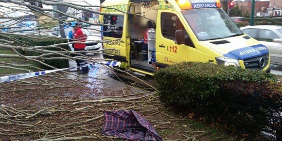 6. Herido tras derribar el viento un árbol de grandes dimensiones en Valladolid