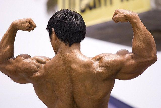 Músculos. Musculación. Fuerza