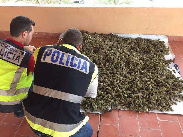 Cogollos de marihuana incautada