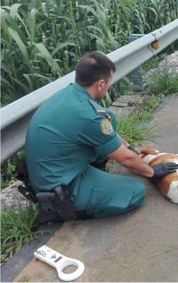 Investigan a un vecino de Mondariz por la muerte de un perro de un vecino