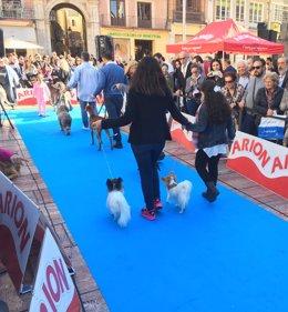 Desfile de perros mi mascota salon fycma palacio de ferias