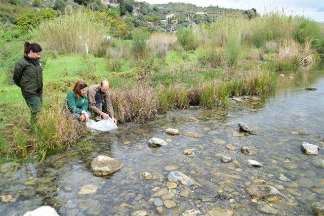 Suelta de anguilas procedentes de un decomiso en el río Guadalfeo
