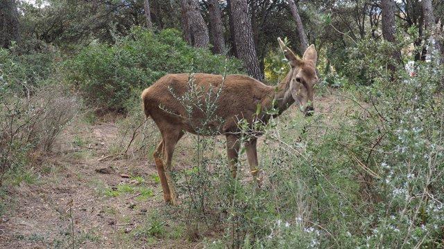 'Bambi' En El Hogar Animal Sanctuary, 15-03-2018